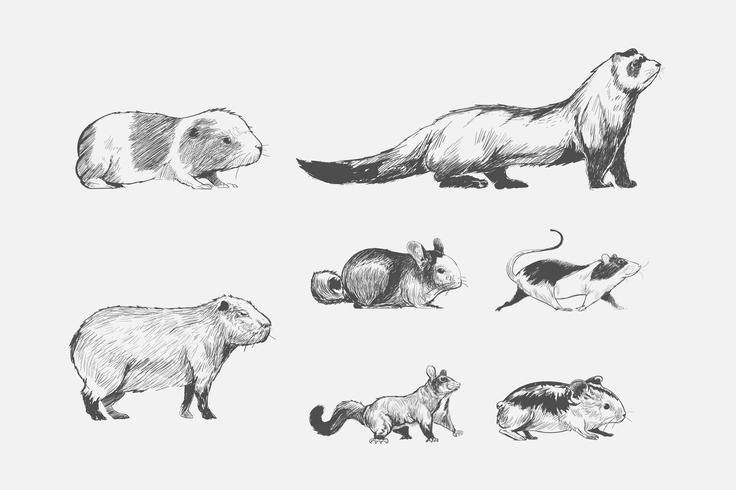 Illustration ritning stil djur samling