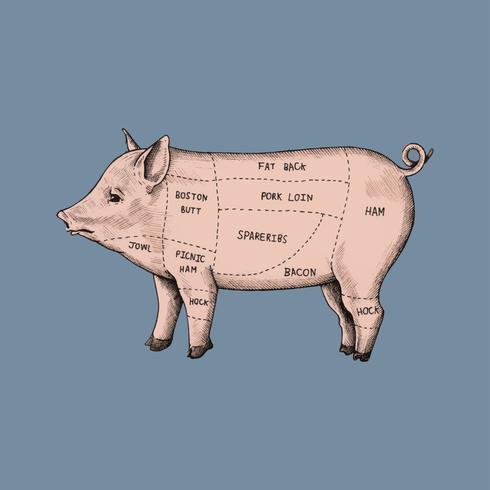 Illustratie van verschillende delen van varken