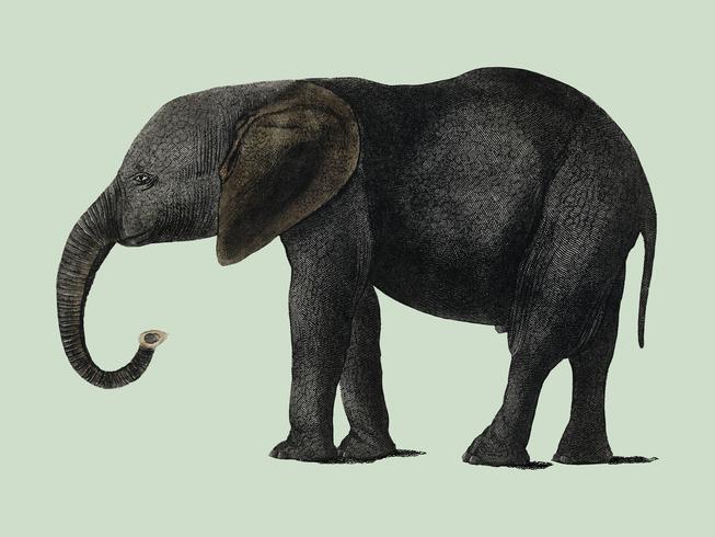 A História da Terra e da Natureza Animada (1848), de Oliver Goldsmith (1728-1774), um retrato de um elefante cinza escuro. Digitalmente aprimorada pelo rawpixel.
