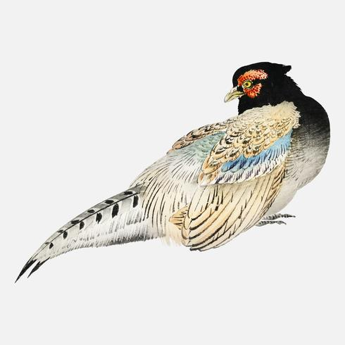 Peregrine falcon by K?no Bairei (1844-1895). Digitally enhanced from our own original 1913 edition of Bairei Gakan.