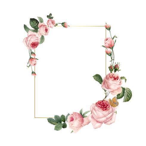 Marco de rosas rosadas de rectángulo en blanco en vector de fondo blanco
