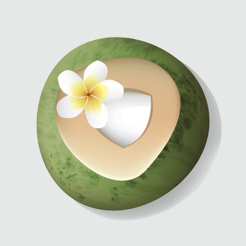 Coco fresco do corte aberto com ilustração do vetor da flor