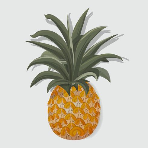 Fresh Pineapple Tropical Fruit Vector Illustration