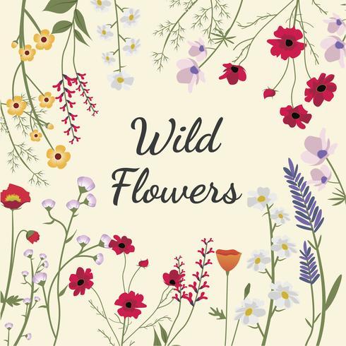 Illustrierte Wildblumen