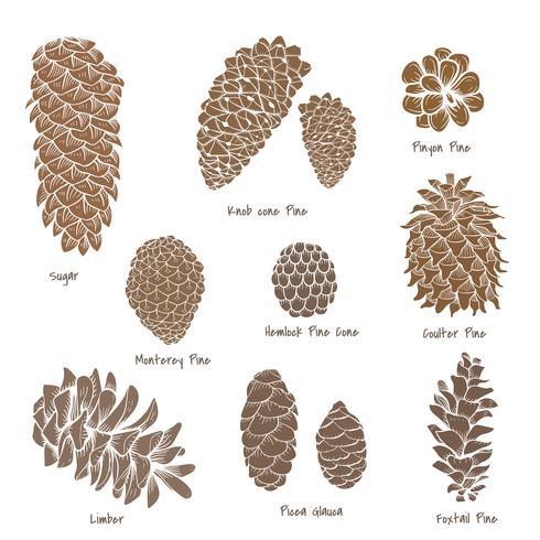 Vetorial, de, pinecone, cobrança