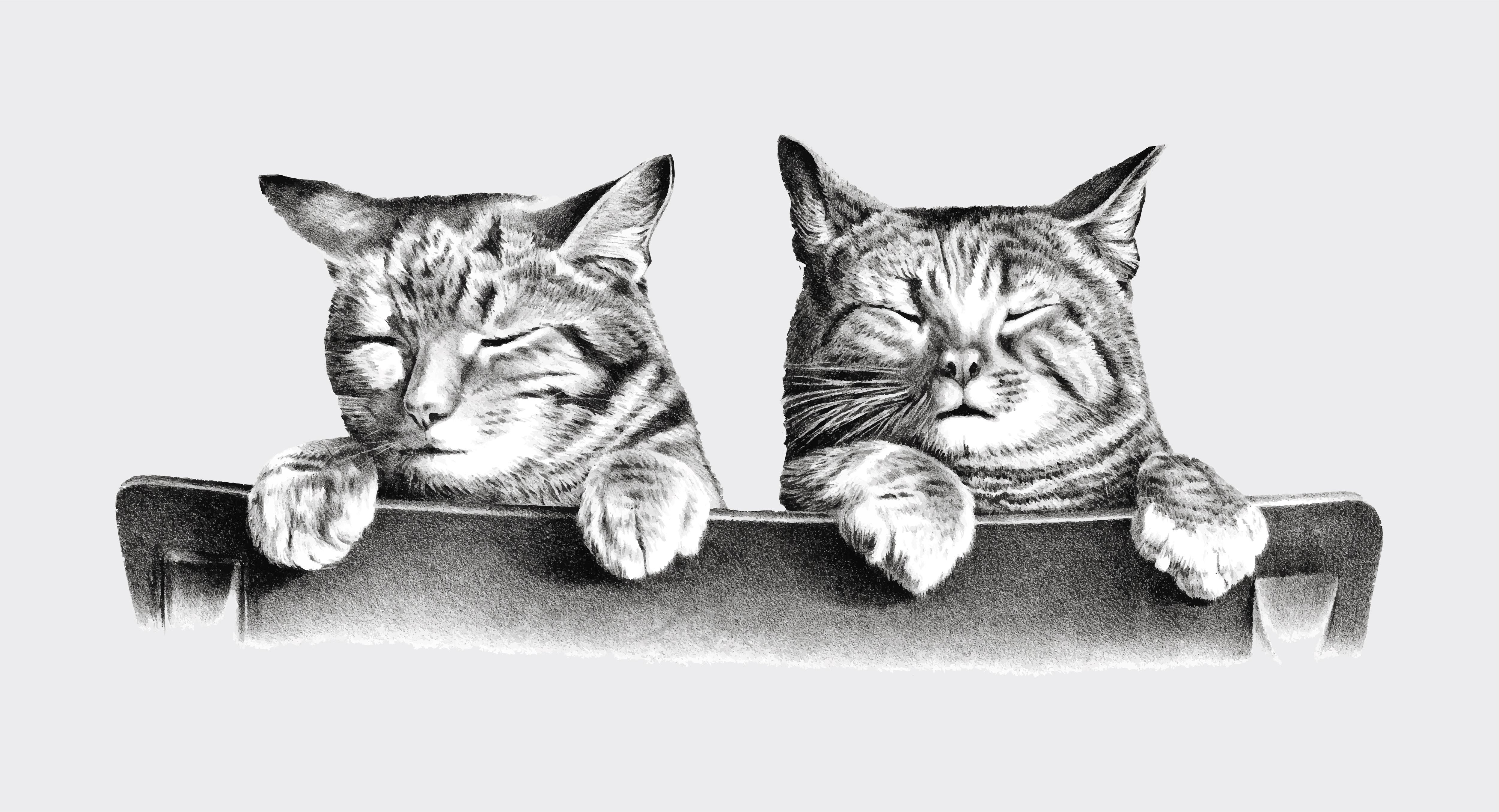 упражнения картинки для декупажа котики черно белые как большую часть