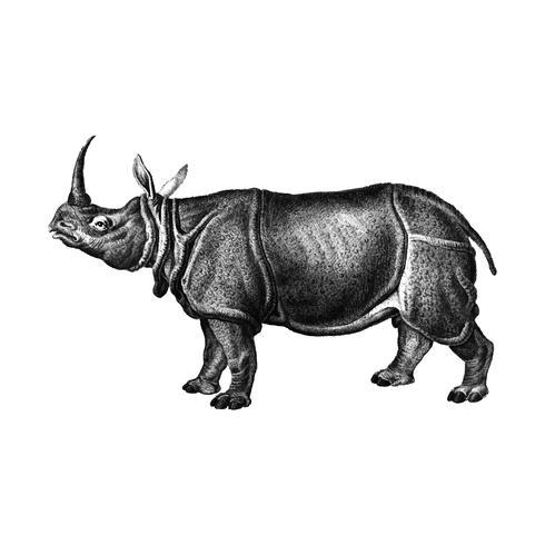 Ilustraciones vintage de rinoceronte indio