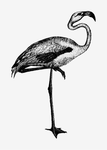 Flamingo skuggning ritning