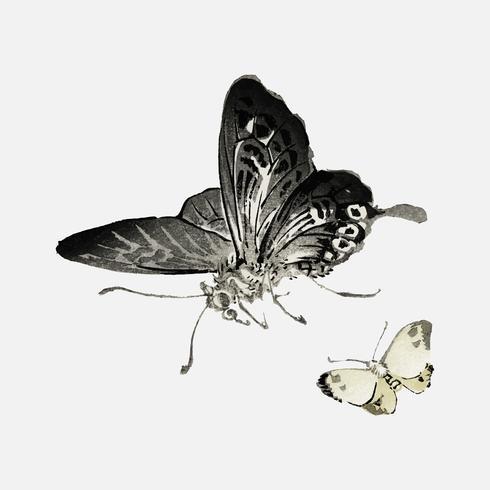 Papillons de K? No Bairei (1844-1895). Amélioré numériquement de notre propre édition originale de 1913 de Bairei Gakan.