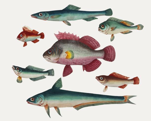 Chinesischer Anstrich von einem rosa Fisch, von zwei grünen Fischen, von zwei grünen Fischen und von zwei braunen Fischen.