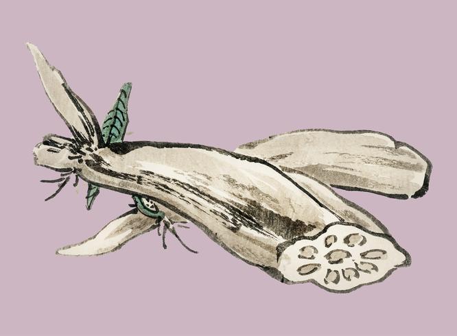 Lotus Root di K? No Bairei (1844-1895). Miglioramento digitale della nostra originale edizione 1913 di Bairei Gakan.