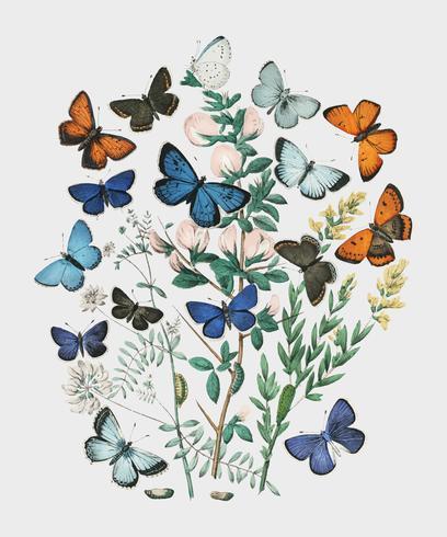 Ilustrações do livro European Butterflies and Moths, de William Forsell Kirby (1882), um caleidoscópio de borboletas e lagartas esvoaçantes. Digitalmente aprimorada pelo rawpixel.
