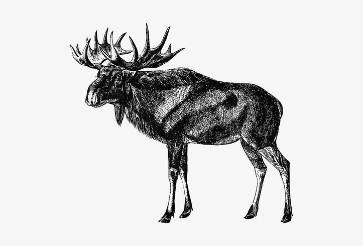 Desenho de sombra de alces escandinavos