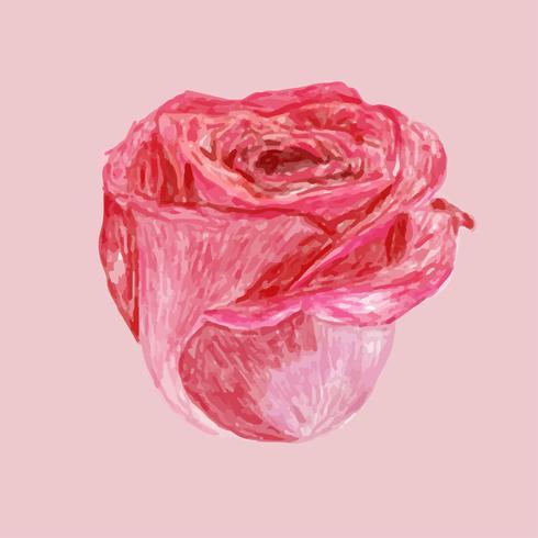 Illustration de dessin fleur rose rouge