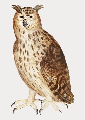 Eagle-uil in uitstekende stijl