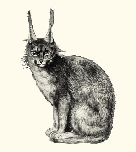 Lynx dans le style vintage