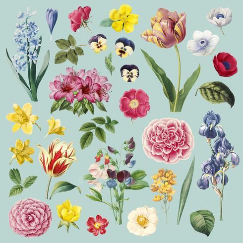 Flores diferentes, conjunto de pintura