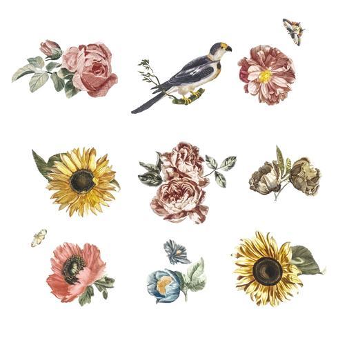 Illustrazione d'epoca di vari fiori e un uccello