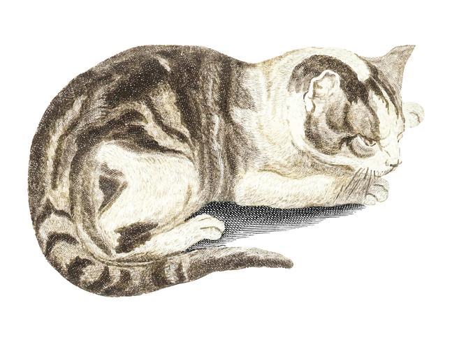Weinleseillustration einer Katze
