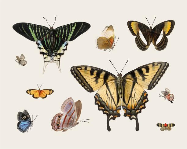 Ilustración vintage de mariposas