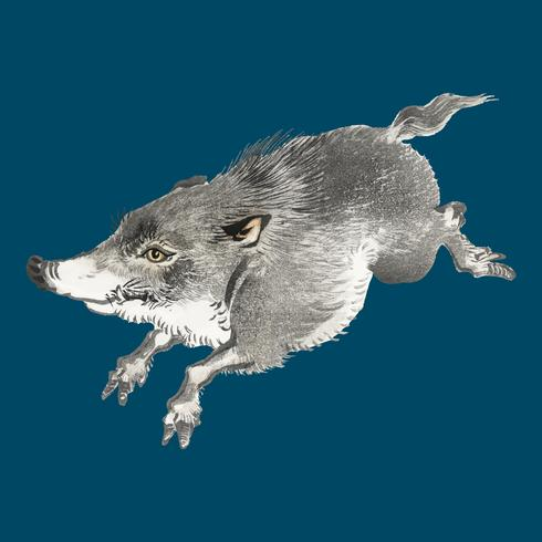 Wild boar by K?no Bairei (1844-1895). Digitally enhanced from our own original 1913 edition of Bairei Gakan.