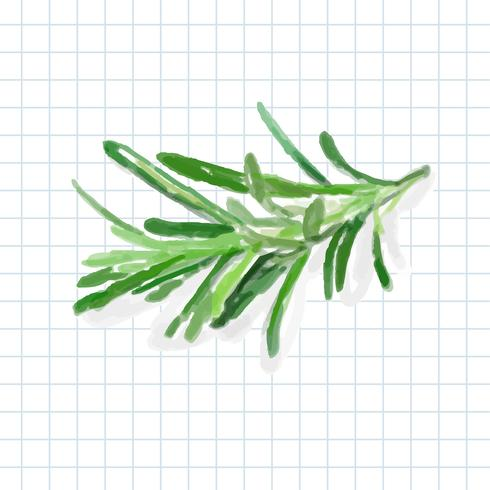 Hand drawn rosemary watercolor style