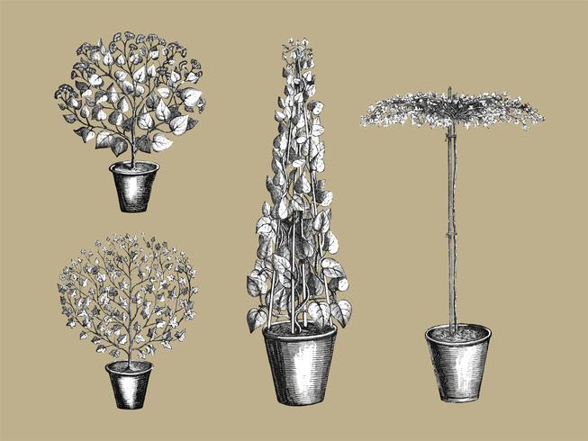 Vindima, plantas, e, folhas, ilustração
