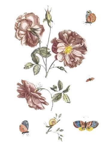 Weinleseillustration von zwei Niederlassungen mit Rosen, vier Schmetterlingen und einer Schnecke