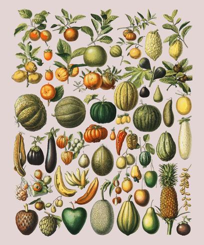 Uma ilustração do vintage de uma grande variedade de frutas e legumes do livro, Nouveau Larousse Illustre (1898), por Larousse, Pierre, Augé e Claude, aumentada Digital pelo rawpixel.