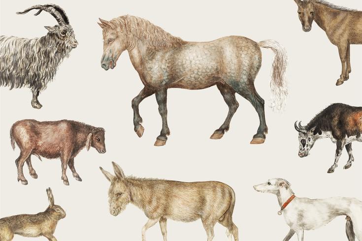 Rural livestock animals