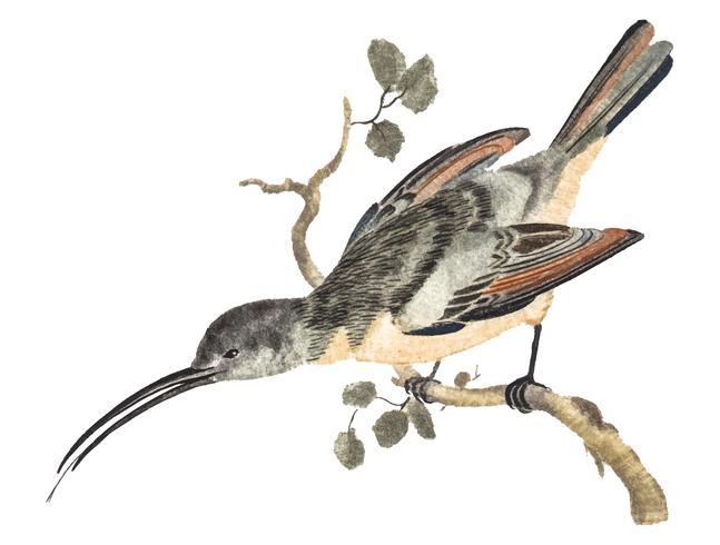 Ilustración vintage de un colibrí