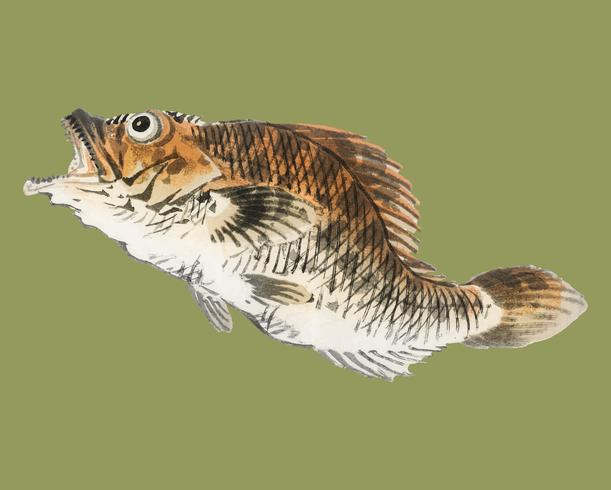 Muskellunge by K?no Bairei (1844-1895). Digitally enhanced from our own original 1913 edition of Bairei Gakan.