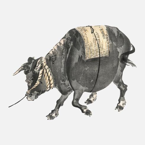 Svart tjur av K? No Bairei (1844-1895). Digitalt förbättrad från vår egen ursprungliga 1913-upplagan av Bairei Gakan.