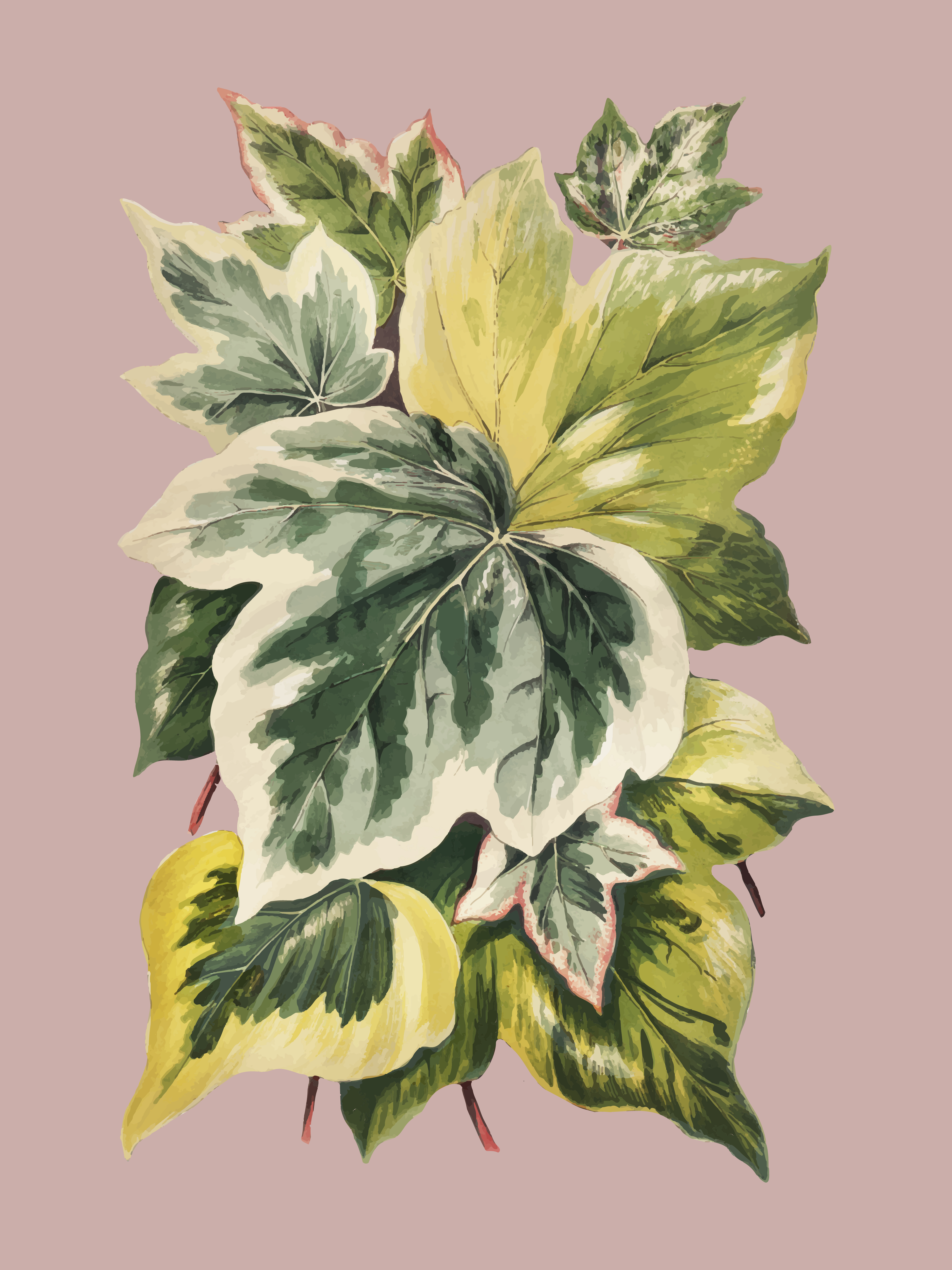 Vintage Plants And Leaves Illustration Download Free