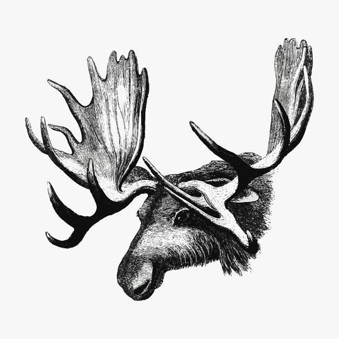 Dibujo de sombra de alce
