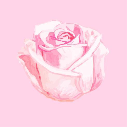 Illustration of drawing rose flower
