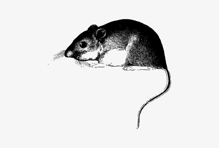 Desenho de sombra do mouse