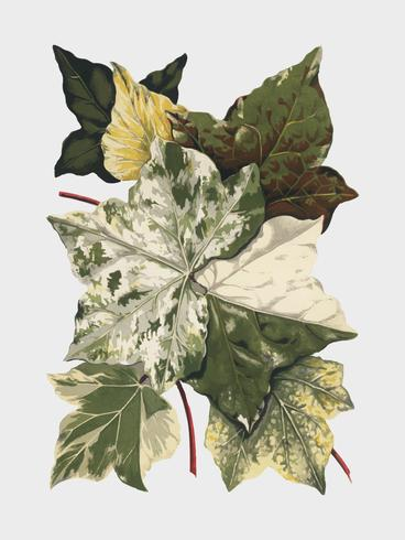 Vintage växter och lämnar illustration