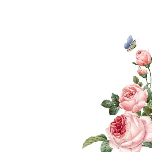 Hand drawn pink roses frame on white background vector