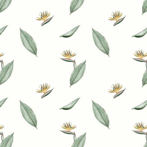 Illustration de fleur oiseau de paradis