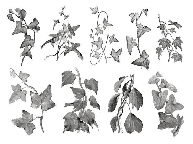 Weinleseanlagen und Blattabbildung