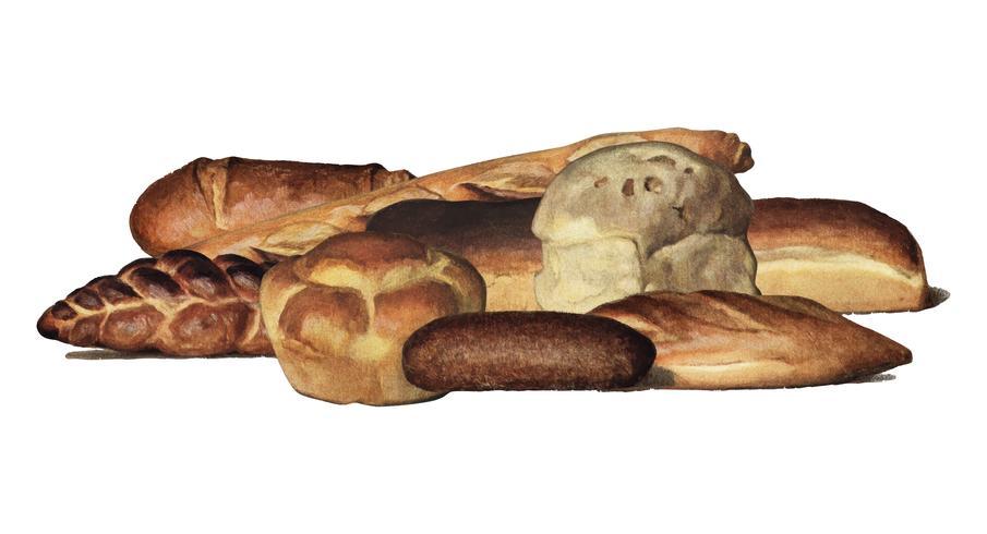 Grocery Encyclopedia (1911), en tappning samling av olika typer av bakade bröd bröd. Digitalt förbättrad av rawpixel.