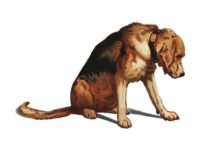Suspense (1877) de Sir Edwin Landseer, un mastiff victorien en attente. Augmenté numériquement par rawpixel.