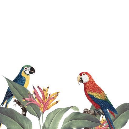 Macaw tropical foliage mockup illustration