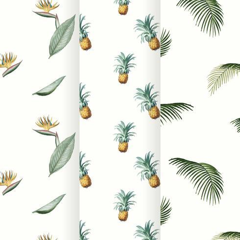 Colección de verano tropical patrón