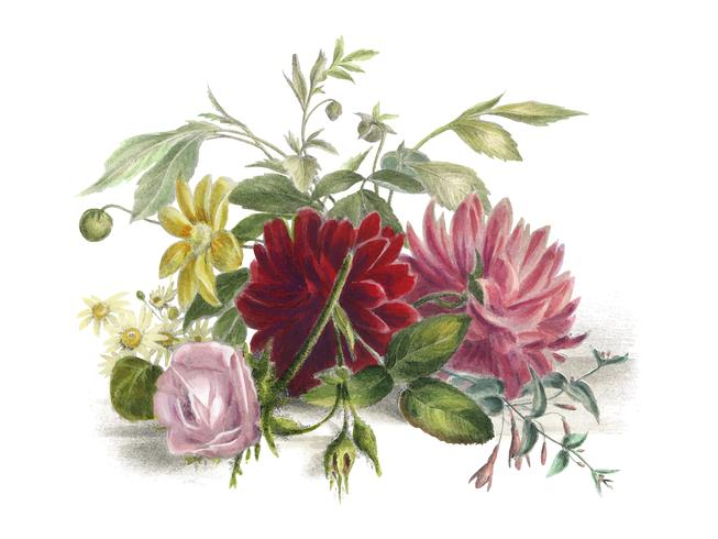 Nature morte colorée de fleurs (1850), un arrangement de belles fleurs. Augmenté numériquement par rawpixel.
