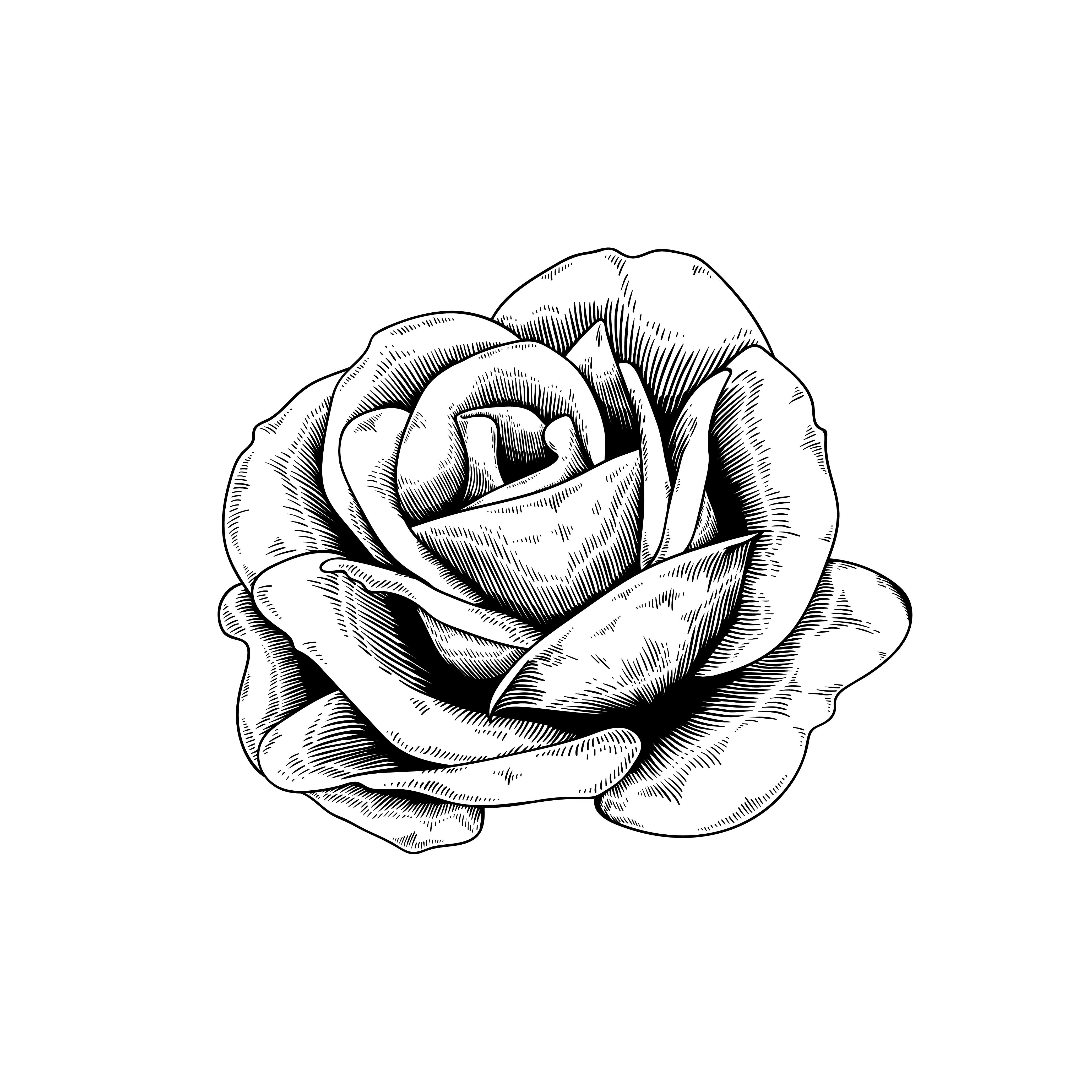 玫瑰花手繪 免費下載   天天瘋後製