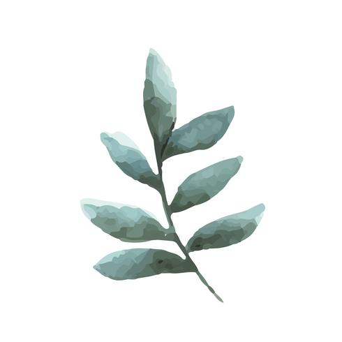 Smilax branch watercolor style vector