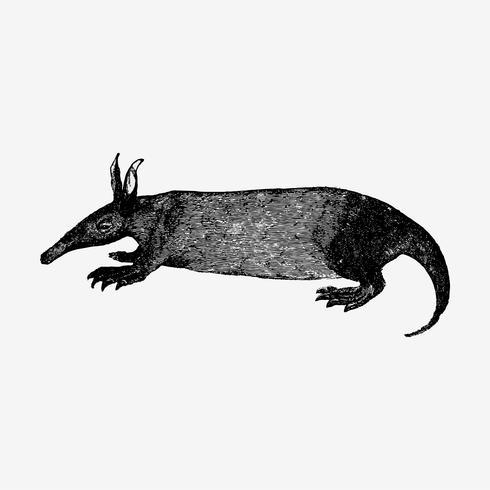 Dibujo de sombra de oso hormiguero