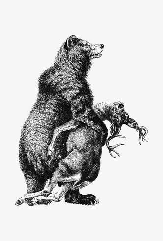 Grizzly Bear with prey shade drawing